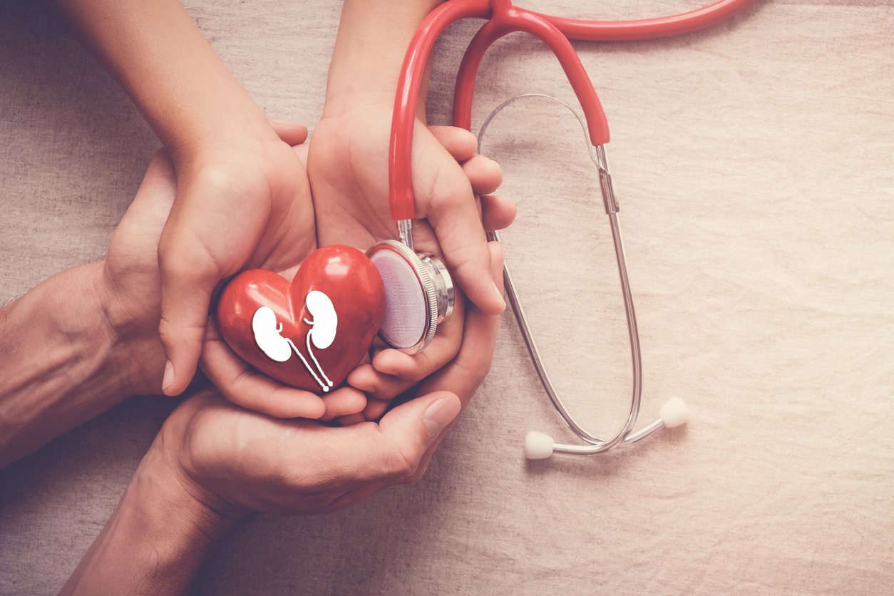 hands holding red heart and kidney