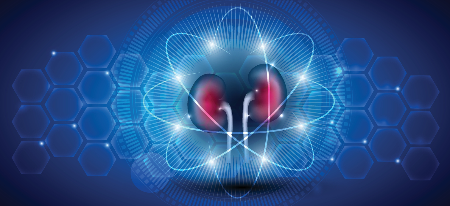 Kidney health care and treatment concept on a scientific background